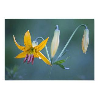 Los E.E.U.U., WA, parque nacional del Monte Rainie Impresión Fotográfica