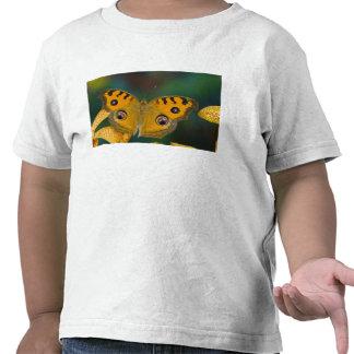 Los E.E.U.U., WA, Sammamish, Butterfy tropical Camiseta
