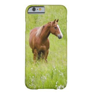 Los E.E.U.U., Washington, caballo en campo de la Funda De iPhone 6 Barely There