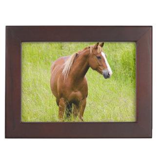 Los E.E.U.U., Washington, caballo en campo de la p Caja De Recuerdos