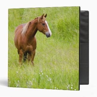 Los E.E.U.U., Washington, caballo en campo de la p
