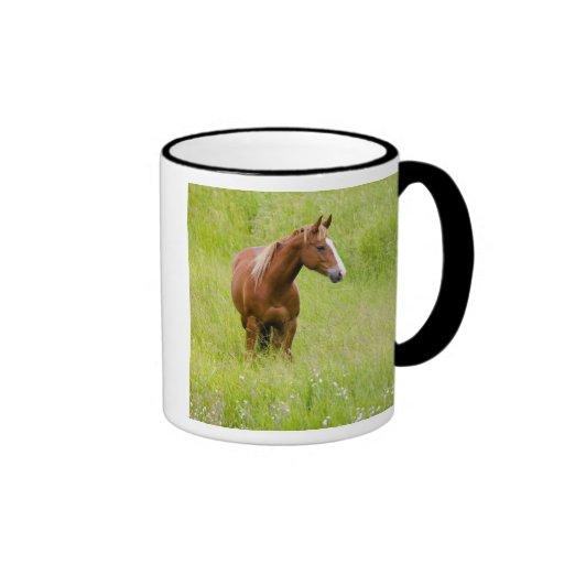 Los E.E.U.U., Washington, caballo en campo de la Taza De Dos Colores