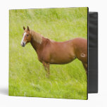 "Los E.E.U.U., Washington, caballo en el campo de Carpeta 1 1/2"""