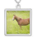 Los E.E.U.U., Washington, caballo en el campo de Colgante Cuadrado