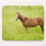 Los E.E.U.U., Washington, caballo en el campo de l Mouse Pads