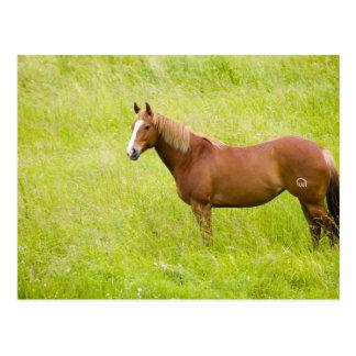 Los E.E.U.U., Washington, caballo en el campo de Postales