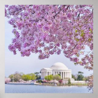 Los E.E.U.U., Washington DC, cerezo en la floració Póster