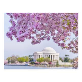 Los E.E.U.U., Washington DC, cerezo en la floració Tarjeta Postal