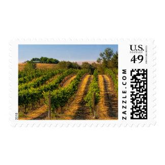 Los E.E.U.U., Washington del este, viñedos de Sello