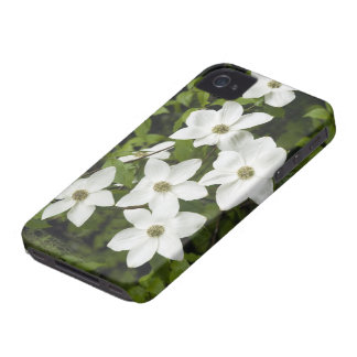 Los E.E.U.U., Washington, Dogwood pacífico, Cornus iPhone 4 Case-Mate Cárcasa