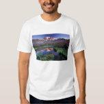 Los E.E.U.U., Washington, el Monte Rainier NP, Camisas