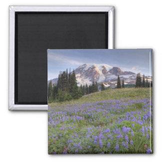 Los E E U U Washington el Monte Rainier NP el Iman De Frigorífico