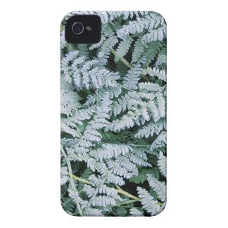 Los E.E.U.U., Washington, Juan un arboreto del Carcasa Para iPhone 4 De Case-Mate