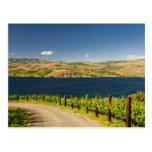 Los E.E.U.U., Washington, lago Chelan. Viñedo Tarjetas Postales