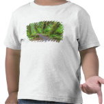 Los E.E.U.U., Washington, parque nacional Camiseta