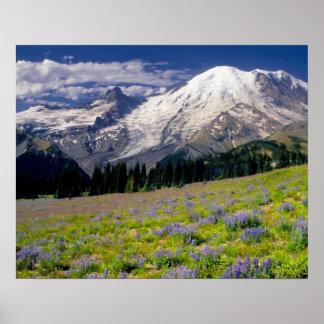 Los E.E.U.U., Washington, parque nacional del Mont Impresiones