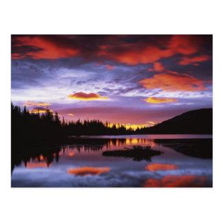 Los E E U U Washington parque nacional del Mont Tarjeta Postal
