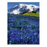 Los E.E.U.U., Washington, parque nacional del Postal
