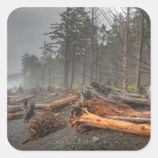 Los E E U U Washington parque nacional olímpico Etiqueta