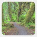 Los E.E.U.U., Washington, parque nacional Colcomania Cuadrada
