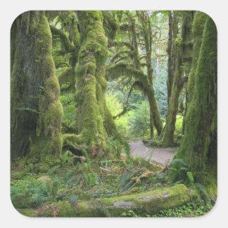 Los E.E.U.U., Washington, parque nacional Calcomanias Cuadradas