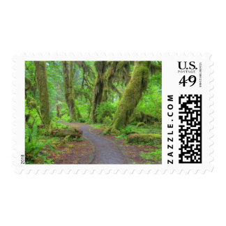 Los E.E.U.U., Washington, parque nacional Sellos