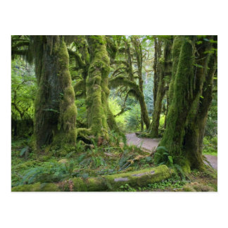Los E.E.U.U., Washington, parque nacional Postal