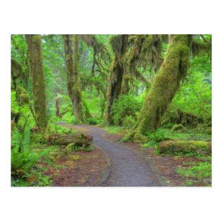 Los E.E.U.U., Washington, parque nacional Tarjetas Postales