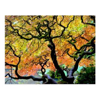 Los E.E.U.U., Washington, Seattle, jardín de Kubot Tarjeta Postal