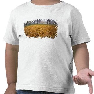 Los E.E.U.U., Washington, Spokane, parque de Camisetas