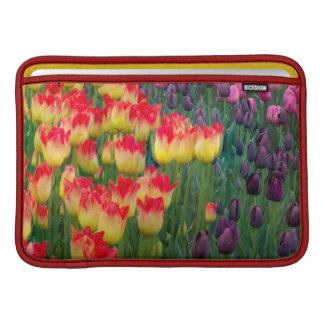 Los E.E.U.U., Washington. Tulipanes florecientes 2 Funda MacBook