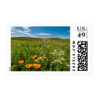 Los E.E.U.U., Washington, Walla Walla. Wildflowers Franqueo