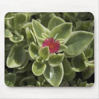 Los E E U U Washington Woodinville flor de Sed Alfombrillas De Ratón