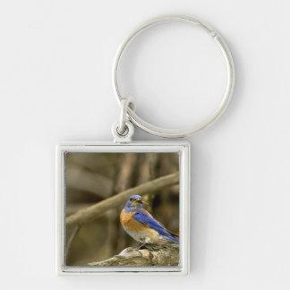 Los E.E.U.U., Washington, Yakima. Bluebird occiden Llavero Cuadrado Plateado