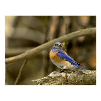 Los E.E.U.U., Washington, Yakima. Bluebird Postal