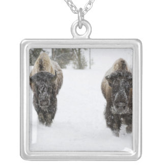 Los E.E.U.U., WY, Yellowstone NP, bisonte american Pendiente