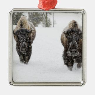Los E.E.U.U., WY, Yellowstone NP, bisonte Adorno Cuadrado Plateado