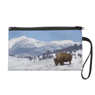 Los E.E.U.U., WY, Yellowstone NP, bisonte del biso