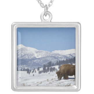 Los E.E.U.U., WY, Yellowstone NP, bisonte del biso Colgantes