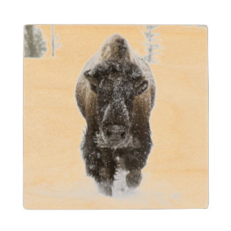 Los E.E.U.U., WY, Yellowstone NP, bisonte Posavasos De Madera
