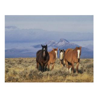 Los E.E.U.U., Wyoming, cerca del grupo de Cody de Postal