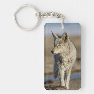 Los E.E.U.U., Wyoming, coyote que camina en la Llavero Rectangular Acrílico A Doble Cara