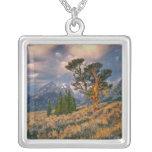 Los E.E.U.U., Wyoming, Teton magnífico NP. La Collar Plateado