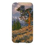 Los E.E.U.U., Wyoming, Teton magnífico NP. La Funda Galaxy S5