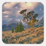Los E.E.U.U., Wyoming, Teton magnífico NP. La Pegatina Cuadrada