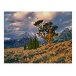 Los E.E.U.U., Wyoming, Teton magnífico NP. La Postales
