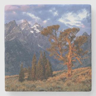 Los E.E.U.U., Wyoming, Teton magnífico NP. Un cedr