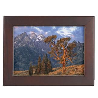 Los E.E.U.U., Wyoming, Teton magnífico NP. Un cedr Cajas De Recuerdos