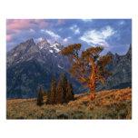 Los E.E.U.U., Wyoming, Teton magnífico NP. Un cedr Fotografias