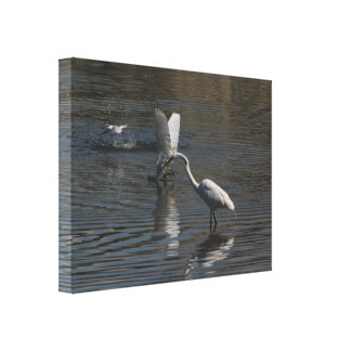 Los Egrets y la pesca de la golondrina de mar Lienzo Envuelto Para Galerías